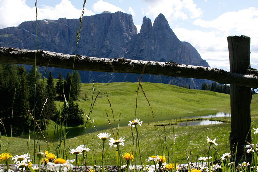 Spring on the Seiser Alm – a real experience for young and old